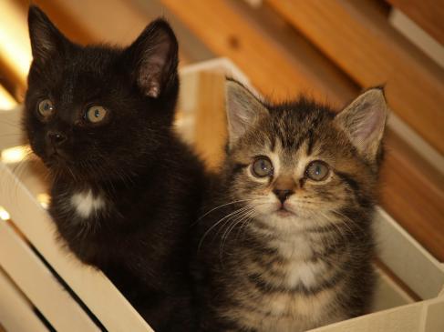 Co zrobić, kiedy kot ciągle miauczy?