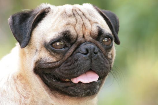 Czy można dawać psu słodycze?