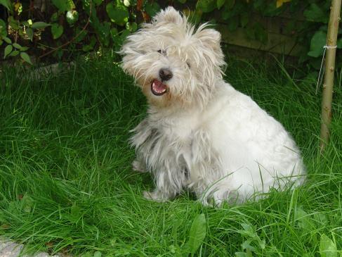Co zrobić, kiedy pies je odchody?