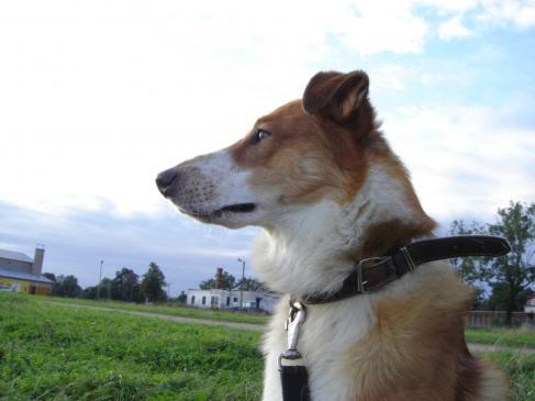 Czym, jak leczyć katar u psa?