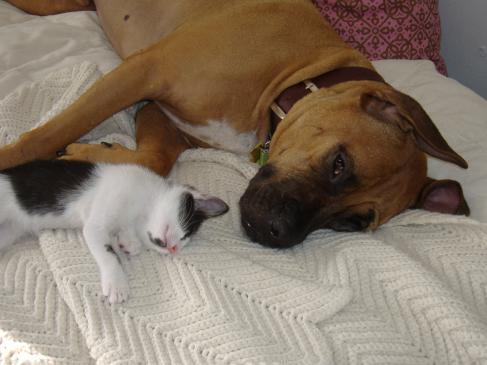 Pies i kot w jednym mieszkaniu? Jak je pogodzić? Znamy sposób!