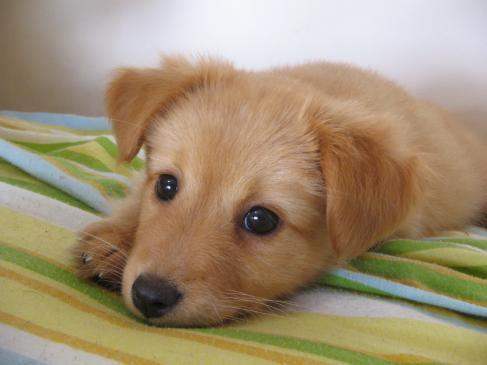 Jaki pies dla alergika?