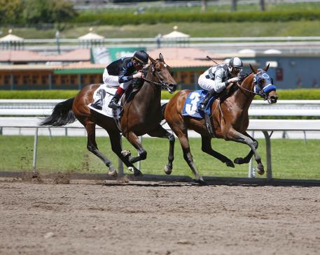 Jak zachować się na wyścigach konnych?