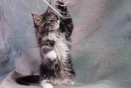 Co kupić dla małego kota? Wyprawka