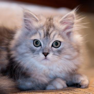 Depresja u kota - objawy, leczenie