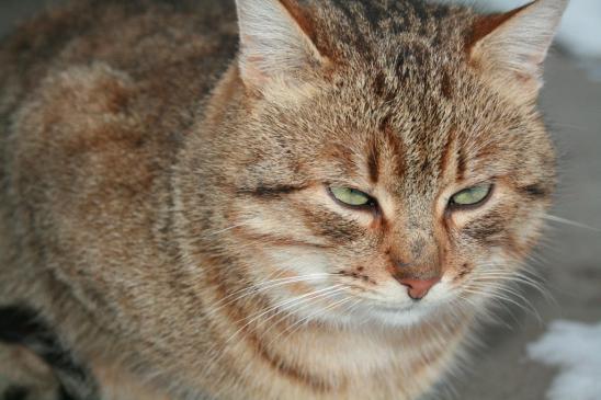 Jak odchudzić kota?