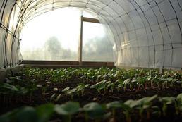Eko żywność - wady i zalety