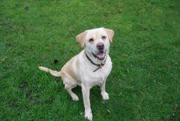 Hemoroidy u psa - objawy