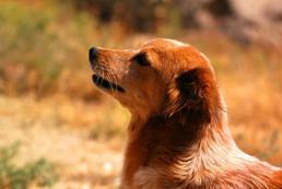 Cukrzyca u psa - objawy