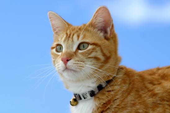Jak przyzwyczaić kota do smyczy? Wady i zalety