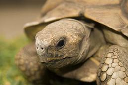 Czym karmić żółwia?