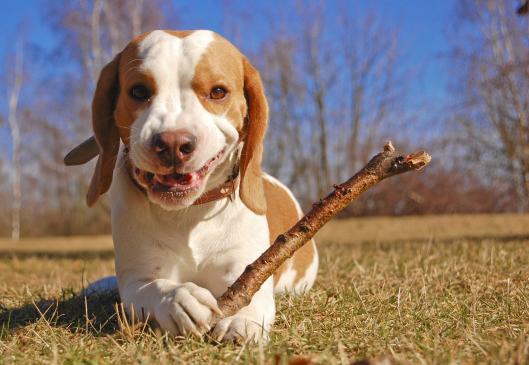 Jakie nagrody dla psa?