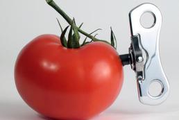 Żywność modyfikowana genetycznie - czym jest?