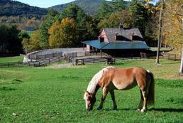 Jak robić zdjęcia koniom?