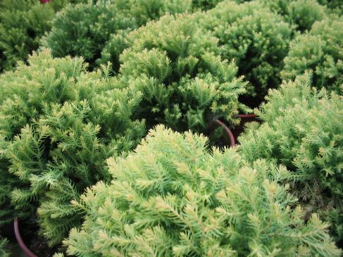 Rośliny okrywowe - jak je uprawiać?