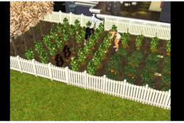 Jak zdobyć owoc życia? The Sims 3
