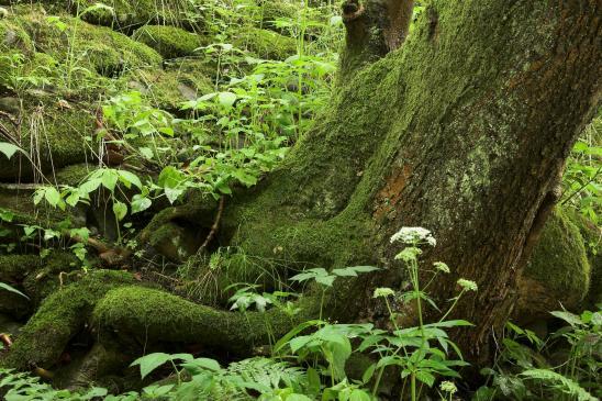 Edukacja przyrodniczo-leśna - szkolenia