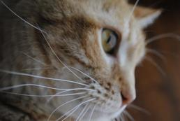 Lęk przed kotami - objawy, leczenie