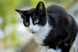 Choroba kociego pazura - objawy