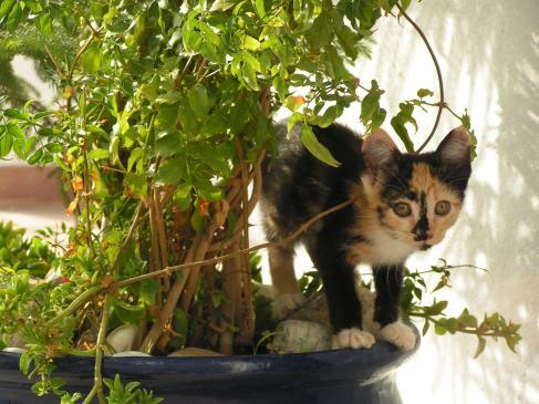 Rosliny trujące dla kota - objawy zatrucia