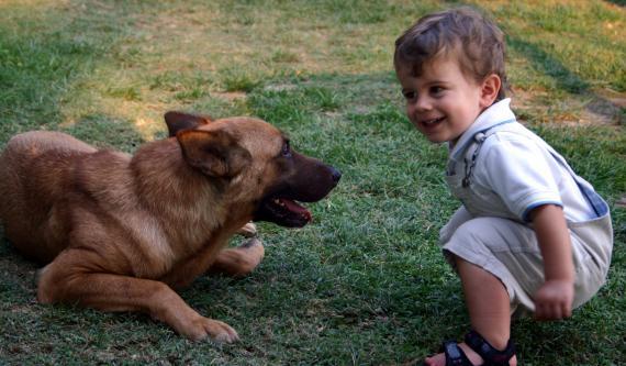 Jak przygotować psa na noworodka?