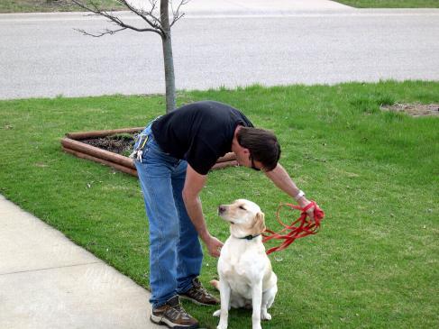 Co zrobić, gdy pies jest zazdrosny?