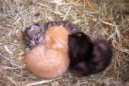 Miejsce do porodu kotki - jak przygotować?
