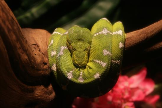 Jakie terrarium dla węża?