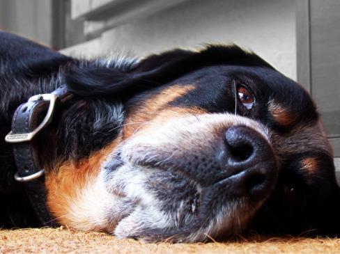 Zatrucie u psa - objawy, co zrobić?