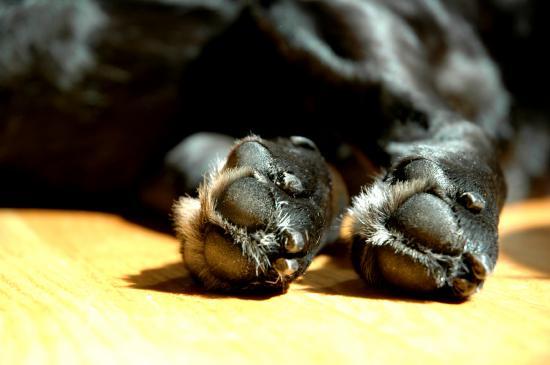Jak dbać o łapy psa?