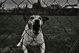 Kastracja psa a agresja