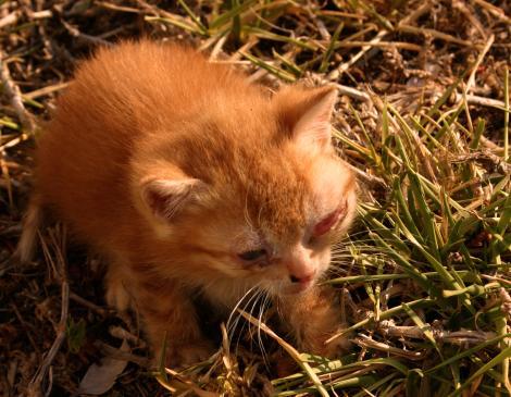 Niedrożność jelit u kota