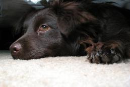 Drgawki u psa - przyczyny