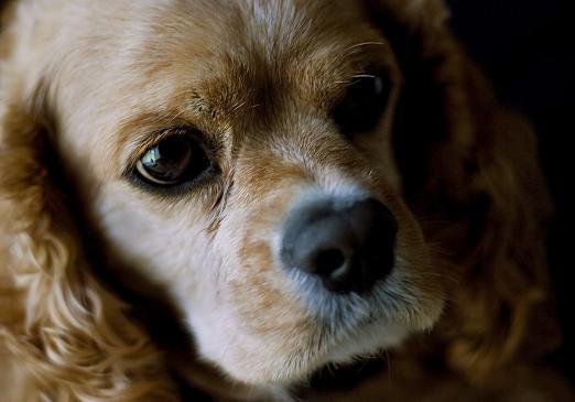 Łupież u psa - objawy, leczenie
