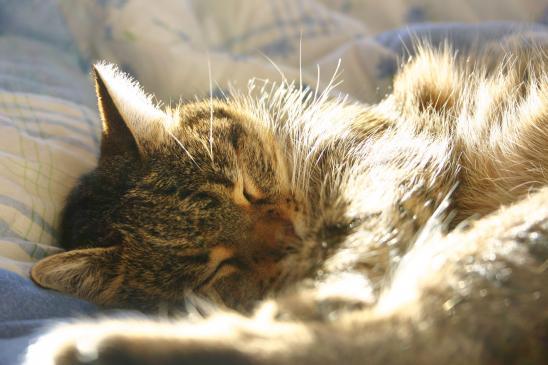 Zapalenie otrzewnej u kota - objawy