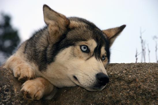 Przepuklina u psa - leczenie