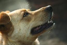 Jak, czym usunąć kamień nazębny u psa samemu?