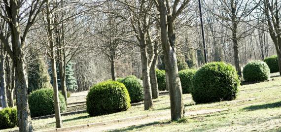 Ogrody dendrologiczne w Polsce