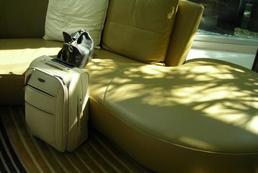 Czy warto ubezpieczyć bagaż?