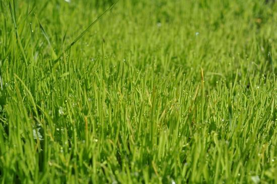 Jak pozbyć się plam z trawy?