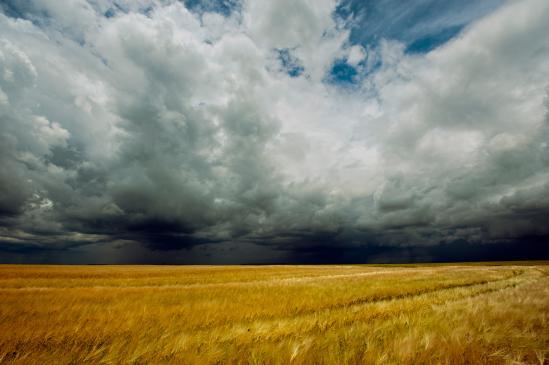 Jakie są zasady dziedziczenia gospodarstw rolnych?