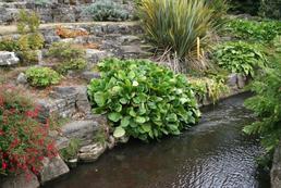 Skalniak w ogrodzie - jak go zrobić?