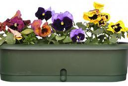 Przesadzanie kwiatów doniczkowych
