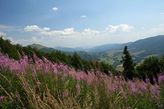 Najpiękniejsze szlaki turystyczne w Bieszczadach