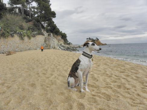 Gdzie na wakacje z psem nad morze?