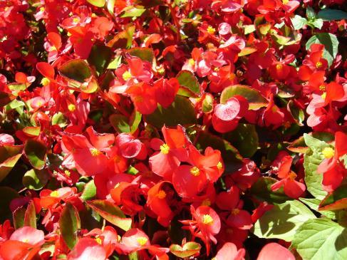 Rośliny jednoroczne do ogrodu