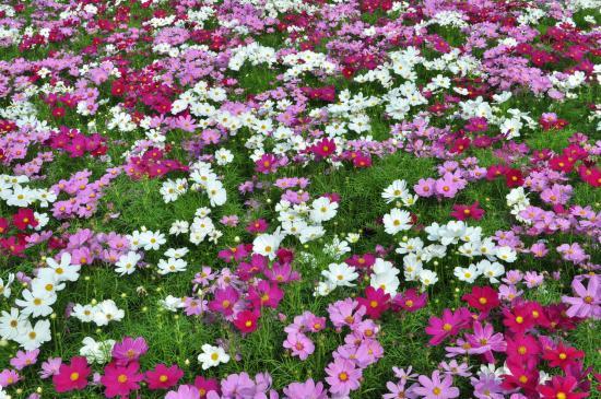 Jak dobierać kolory w ogrodzie?