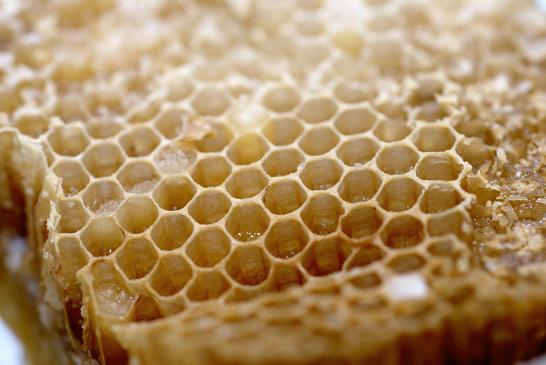 Jak powstaje miód pszczeli?