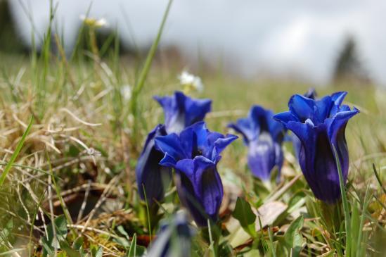 Kolory w ogrodzie - niebieski, granatowy