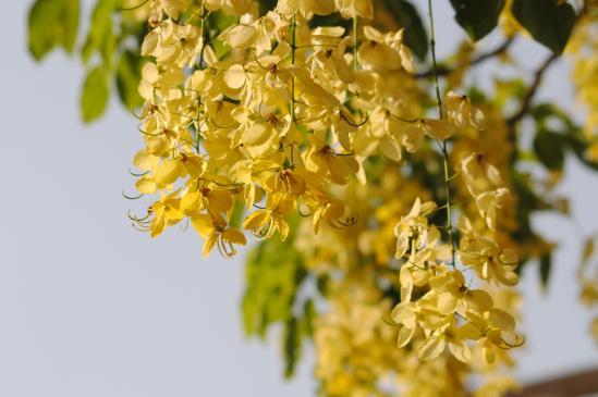 Kolory w ogrodzie - żółty, złoty
